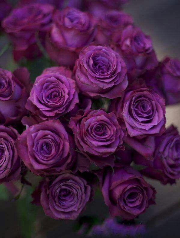вариант покупки кустовые розы сорта сиреневого цвета фото отличие постановочной