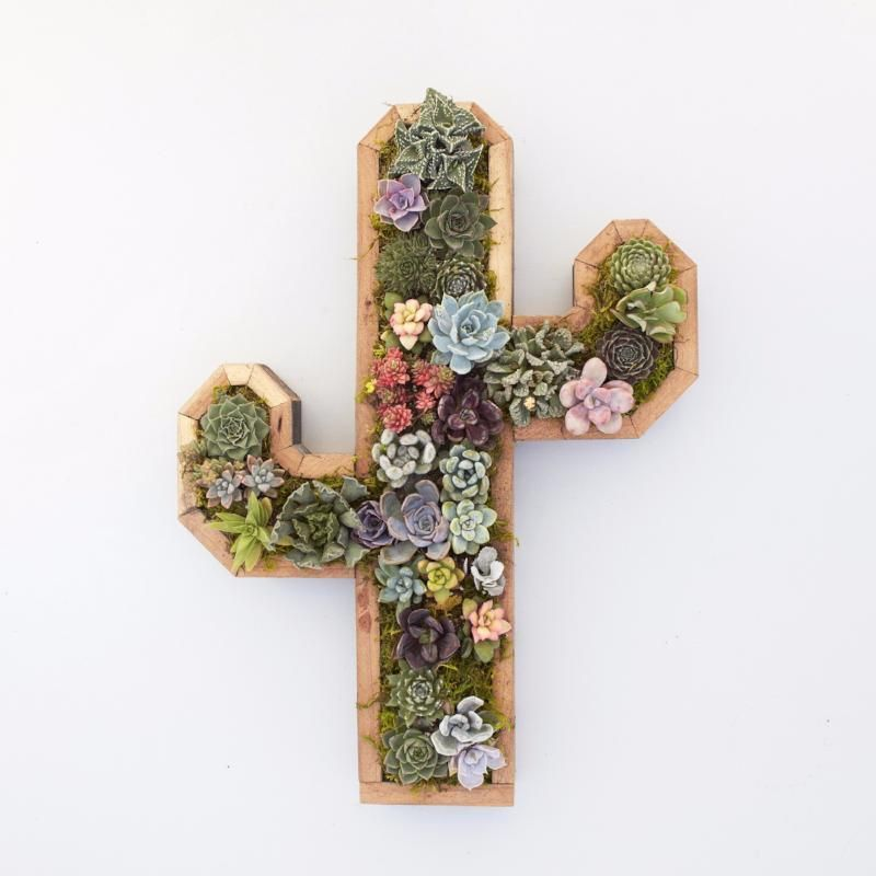 Redwood Cactus Planter