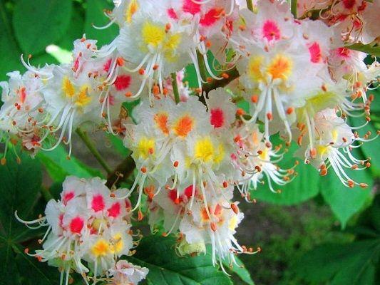 image gallery imagenes de flores preciosas - Fotos De Flores Preciosas