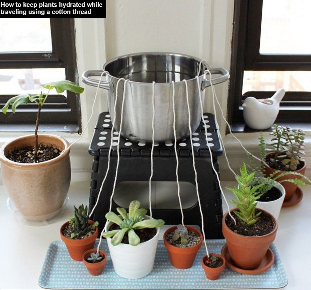 How to keep plants alive while travelling   Plants, Self watering ...