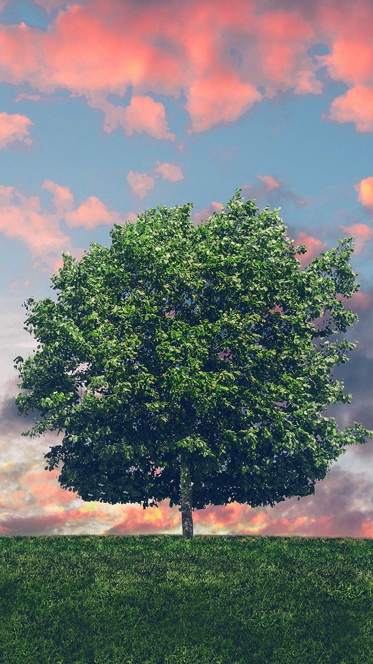 Nk50 Tree Nature Solo Nature Green Red New Wallpaper Iphone