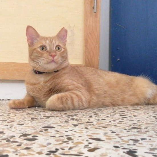 Nala Having A Relaxing Afternoon Doha Qatar Cat Catstagram