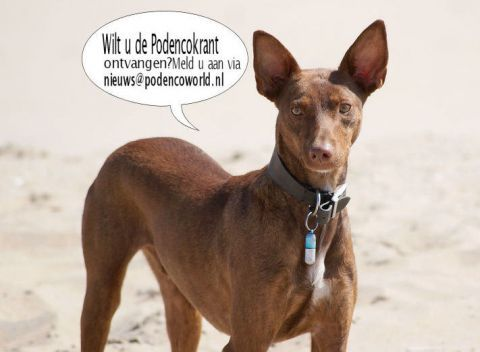 Podenco World Foundation: Help the Podenco in Spain and Portugal.  Newsletter sign up: Click on the slide! Site has option to choose from 18 languages. The Podenco is a Spanish hound dog originally from the Canary Islands. Podencoworld.nl