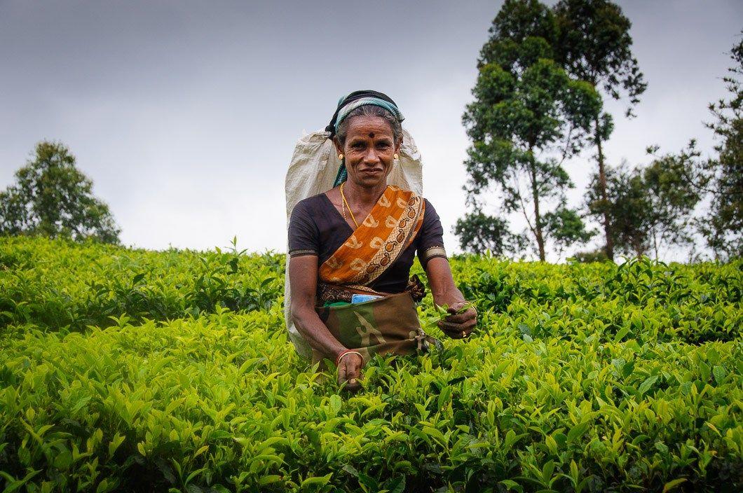 marketing mix for sri lankan tea Published on dec 16, 2017 sri lankan tea rejected from russian markets රුසියානු වෙළෙඳ පොළෙන් ලංකාවේ තේ ඉවතට.