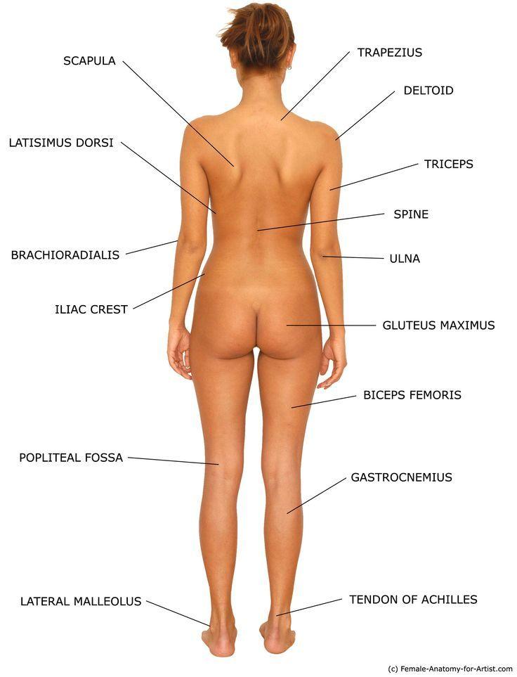 Anatomy Female on Pinterest | Anatomy, Female Anatomy Reference ...