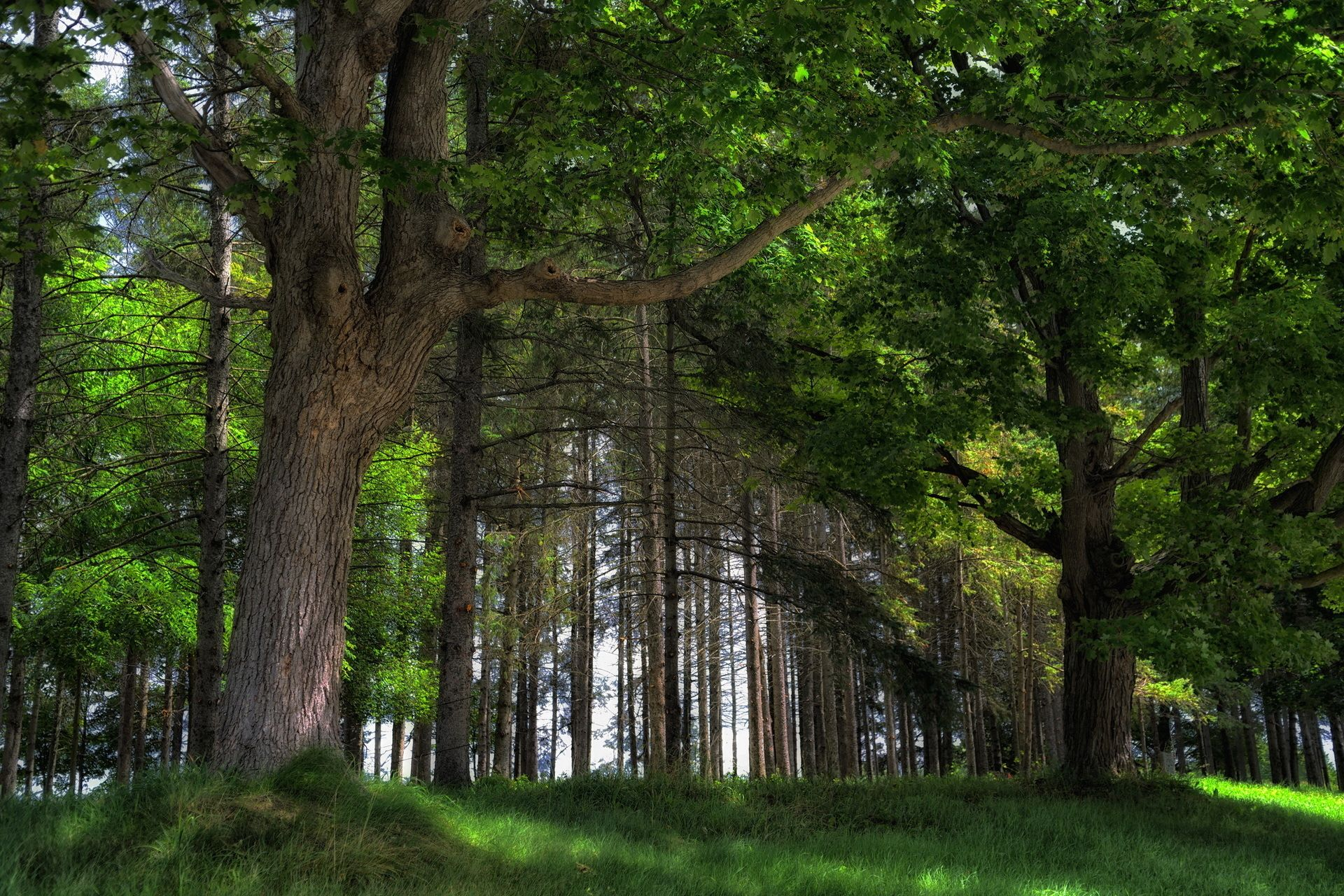4k wallpaper nature redwoods - photo #23