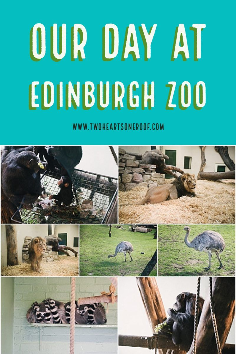 Family Day Out In Edinburgh Zoo Edinburgh Zoo Days Out In Scotland Family Days Out