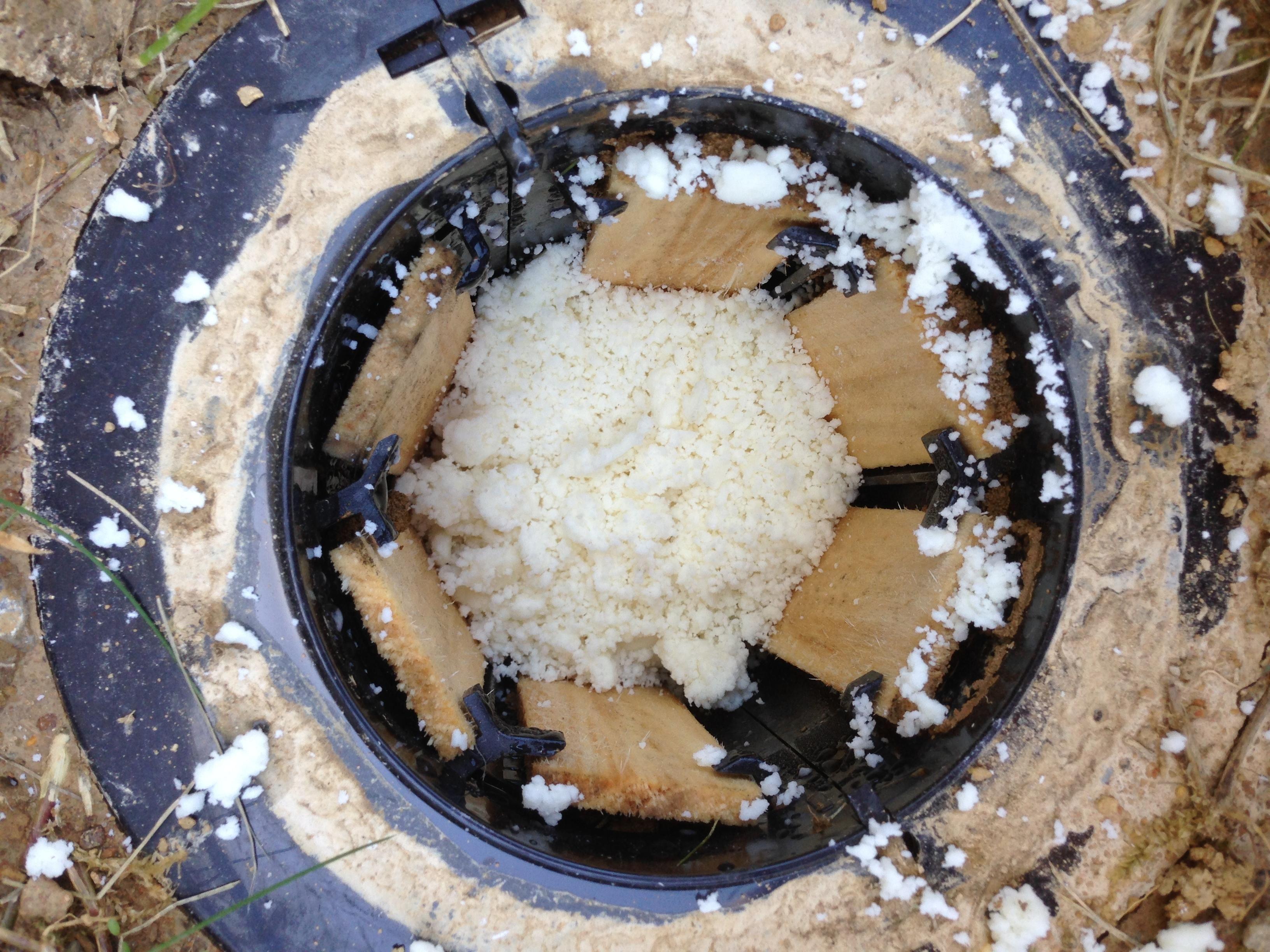 Termite Control Termite Bait Termites Termite Pest Control