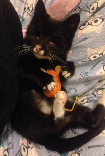 Rescue Kitten With No Eyes Won T Leave Her New Mom S Side Kitten Rescue Kittens Cat Adoption