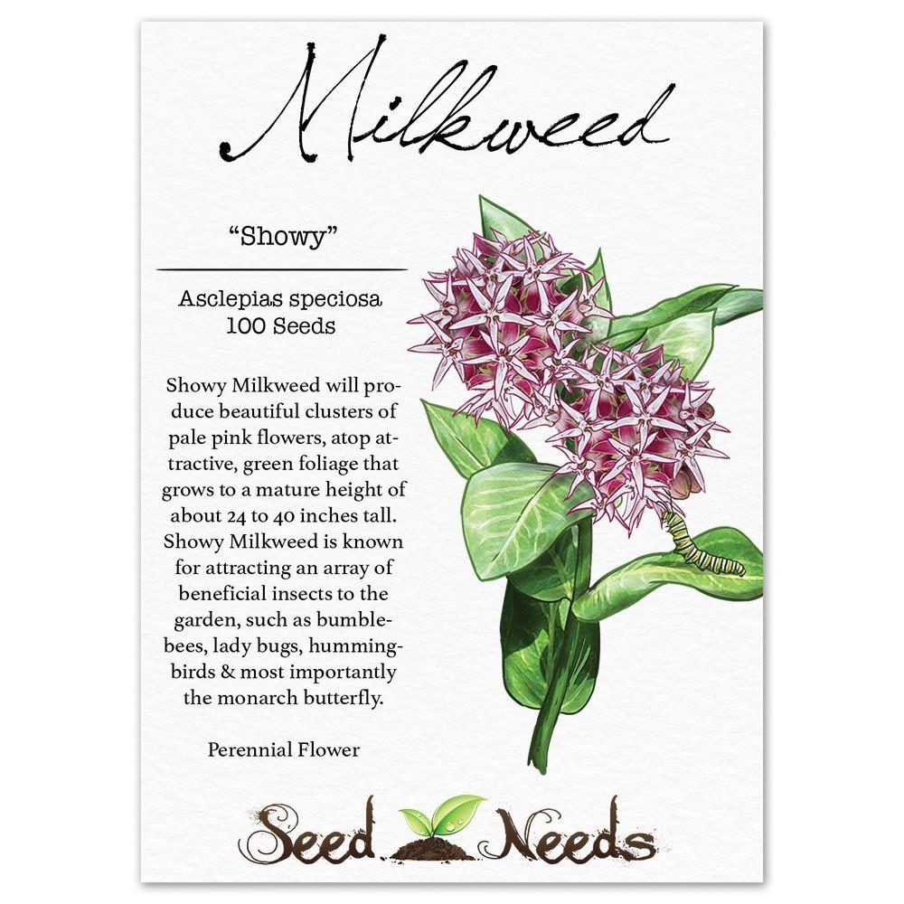 Showy Milkweed Seeds Asclepias Speciosa Perennial Flowering