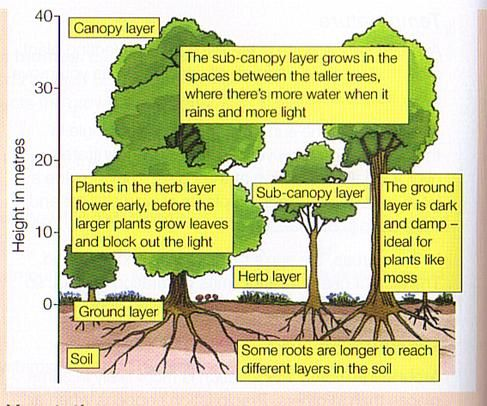 what type of ecosystem is ohio