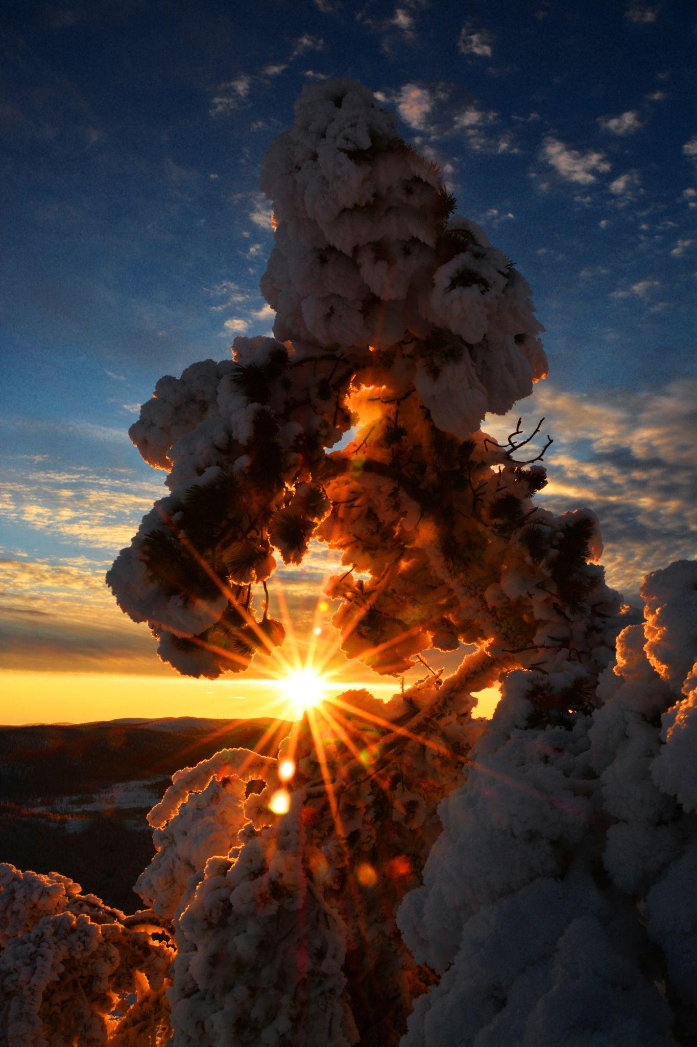 Light peeking through snowy trees in Sweden. Photography by Gonzalo, Navarro.
