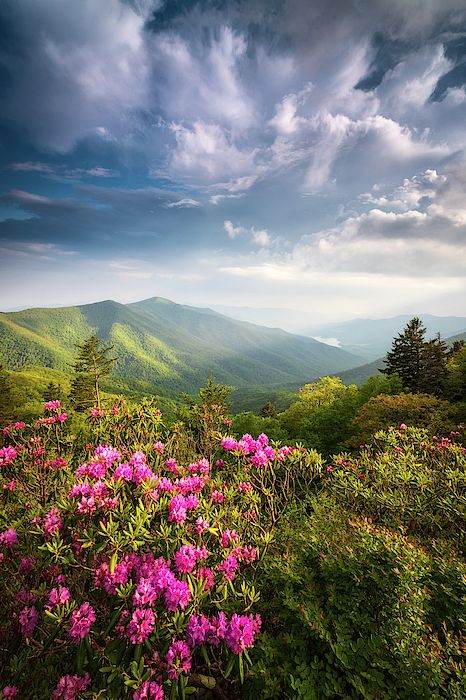 North Carolina Blue Ridge Parkway Asheville Nc Mountains Landscape by Dave Allen