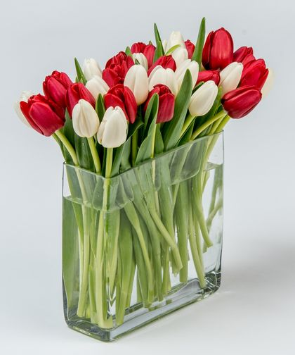 Candy Cane Tulips This Simple Yet Beautiful Collection Of Red And White Tulips Is Designed In Our Rectangular Glass Vase Vesennie Cvety Tyulpany Cvety