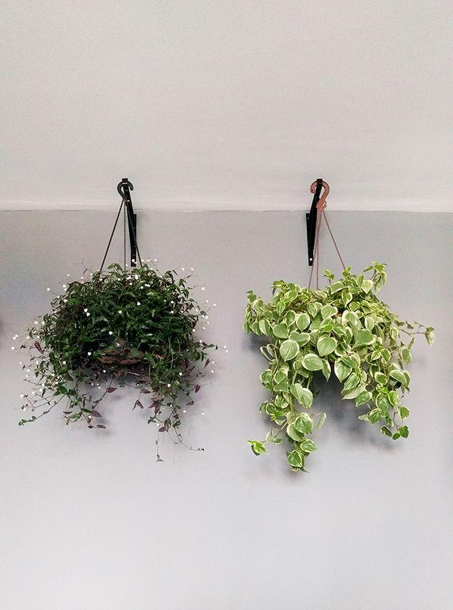 5 tipos de plantas ideais para ter em vasos pendentes dentro de casa