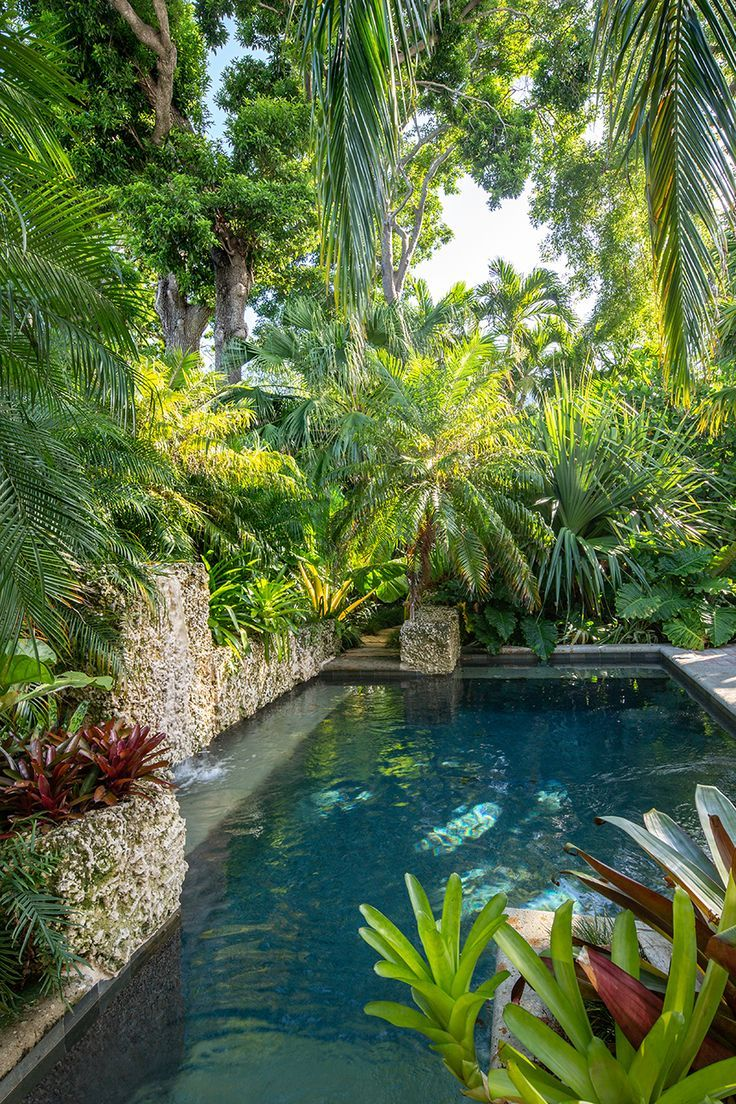 tropical backyard, pool, trees