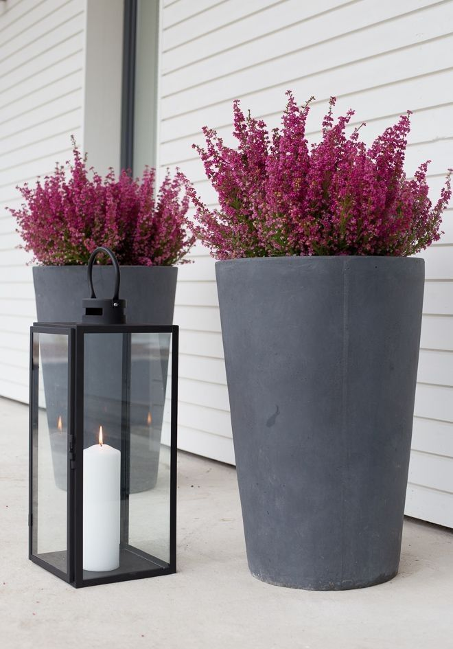 Photo of These heathers look fiery and beautiful against the deep grey planters. Ideas fo…