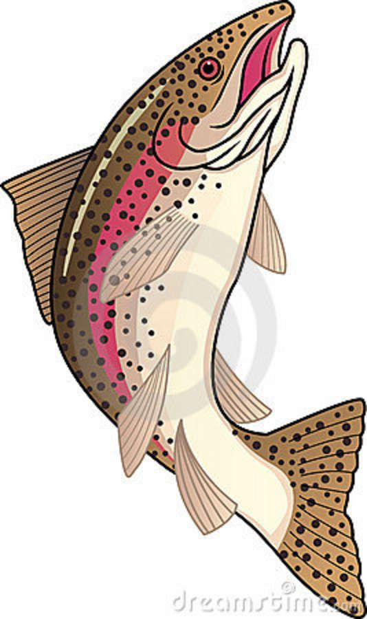 Rainbow Trout Pictures Free Trout Royalty Free Stock Photography