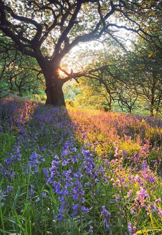 Bluebell Carpet Portrait Landscapes Spring Landscape Photography Beautiful Landscapes Spring Landscape