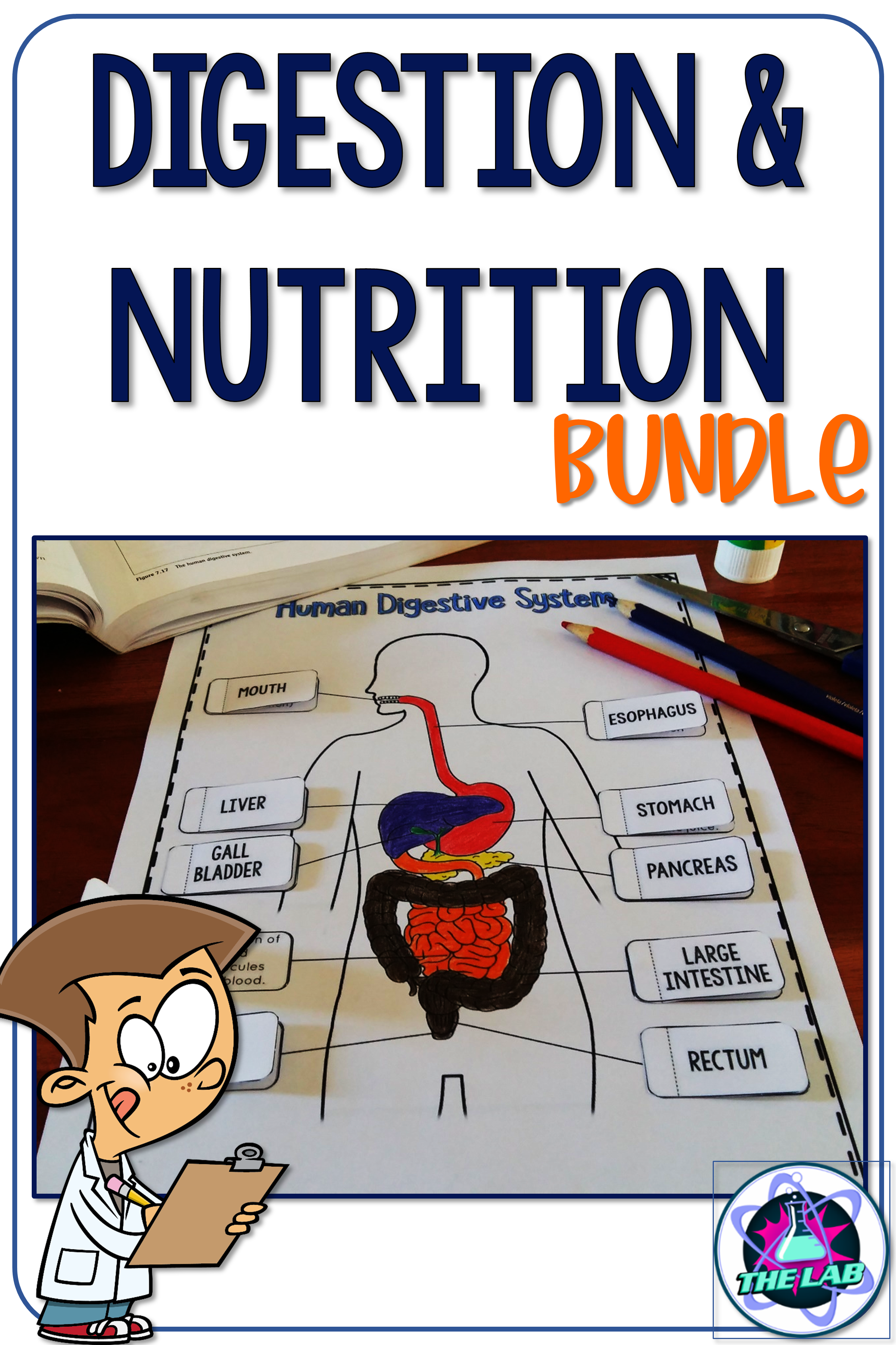 Digestion And Nutrition Bundle
