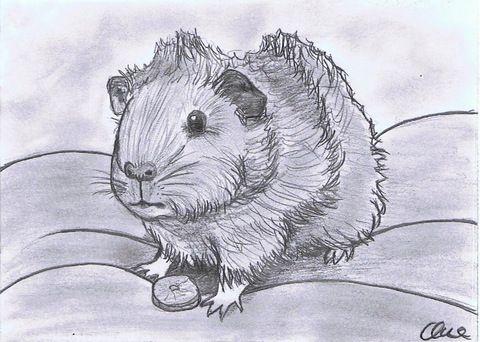 Zeichnung Bleistift Meerschweinchen Von Pilli Zeichnen