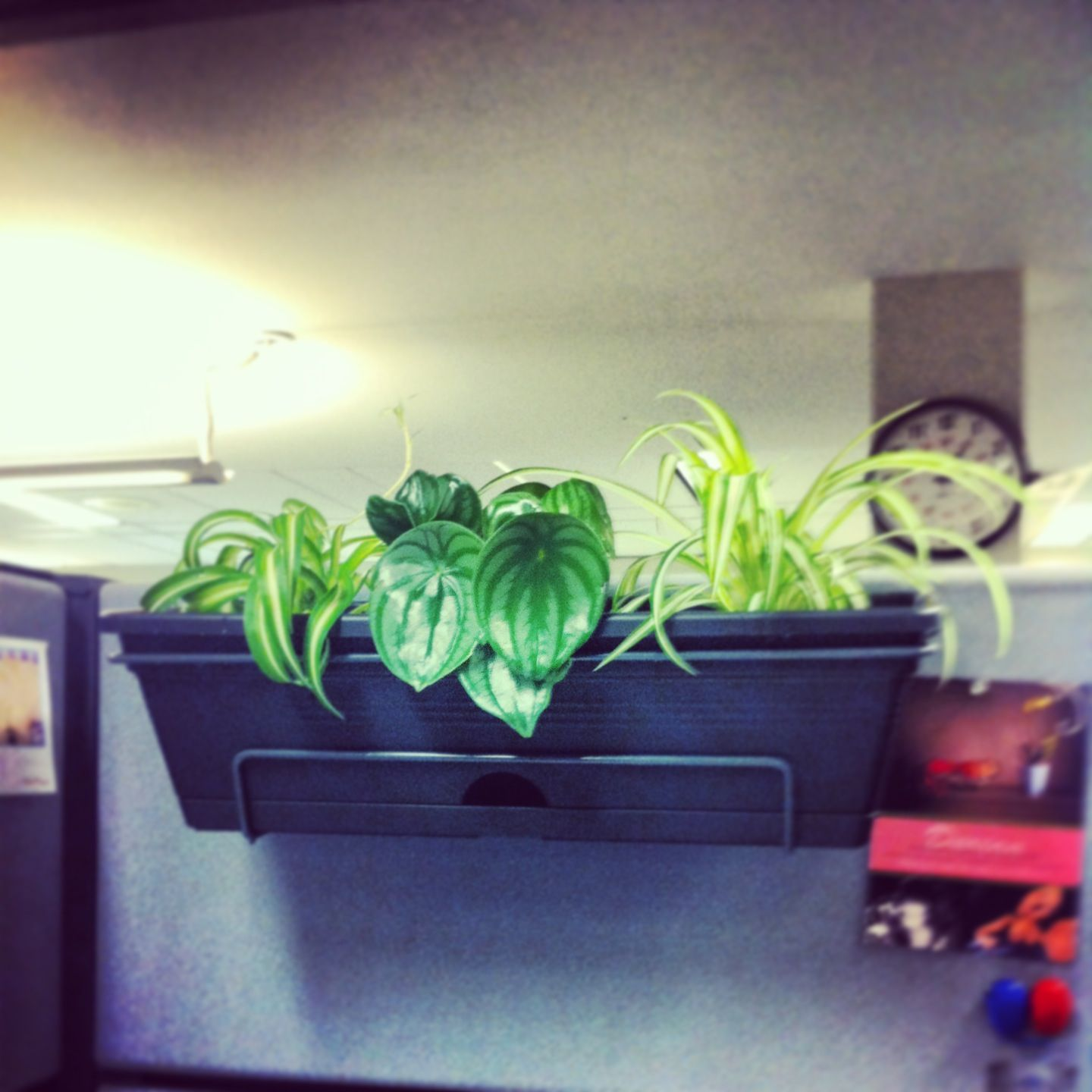 Cubicle Wall Planter Balcony Planters Also Work On Cubicle Walls Office Cubicle