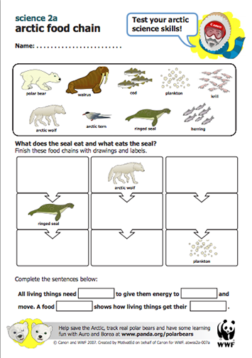 Heres A Wwf Lesson Plan On Arctic Food Chains Too Tough For First