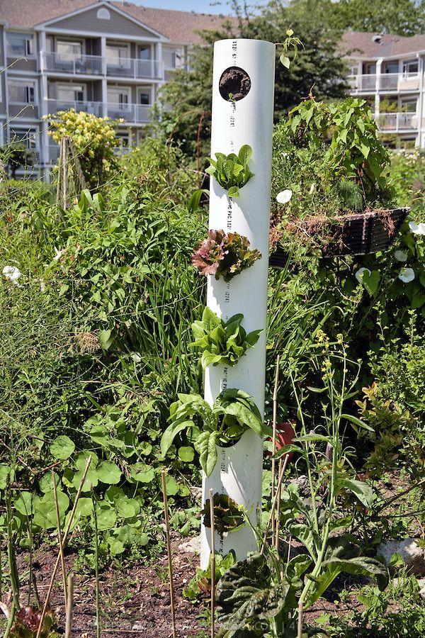 Jard n vertical con tuber a de pvc reciclaje y diy - Macetas para jardin vertical ...