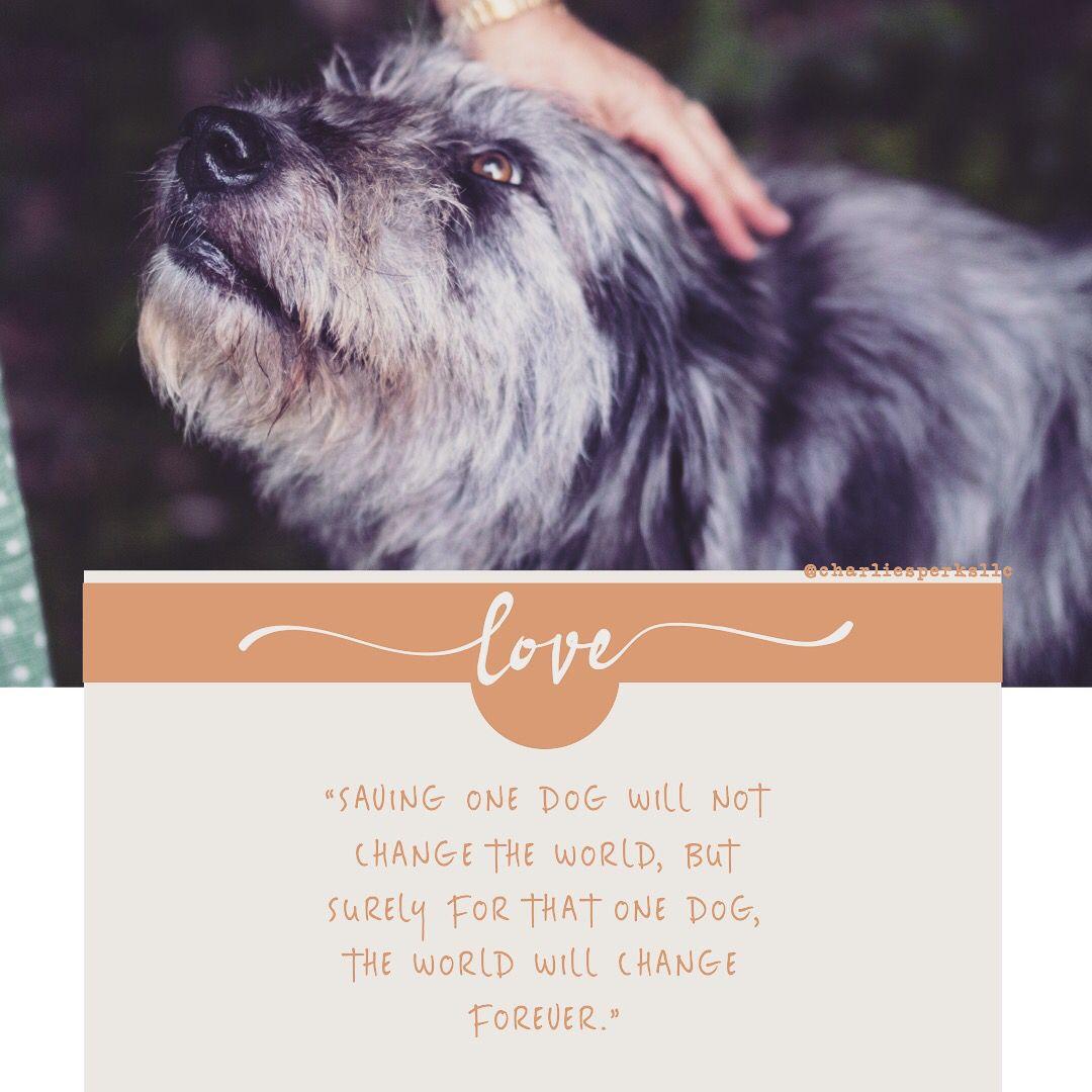 Dogs Pet Adoption Pet Adoption Save A Dog Dog Adoption