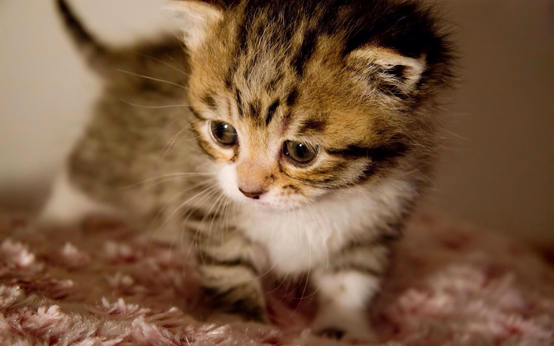 Cute kitten Too cute animals Animals Pinterest