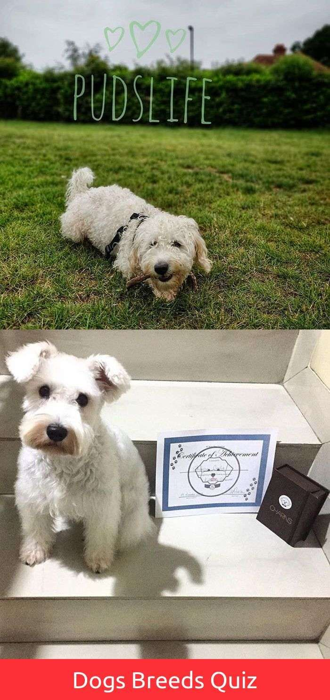 Sensitive funny dog and cat quotes dog tattoo leg pinterest