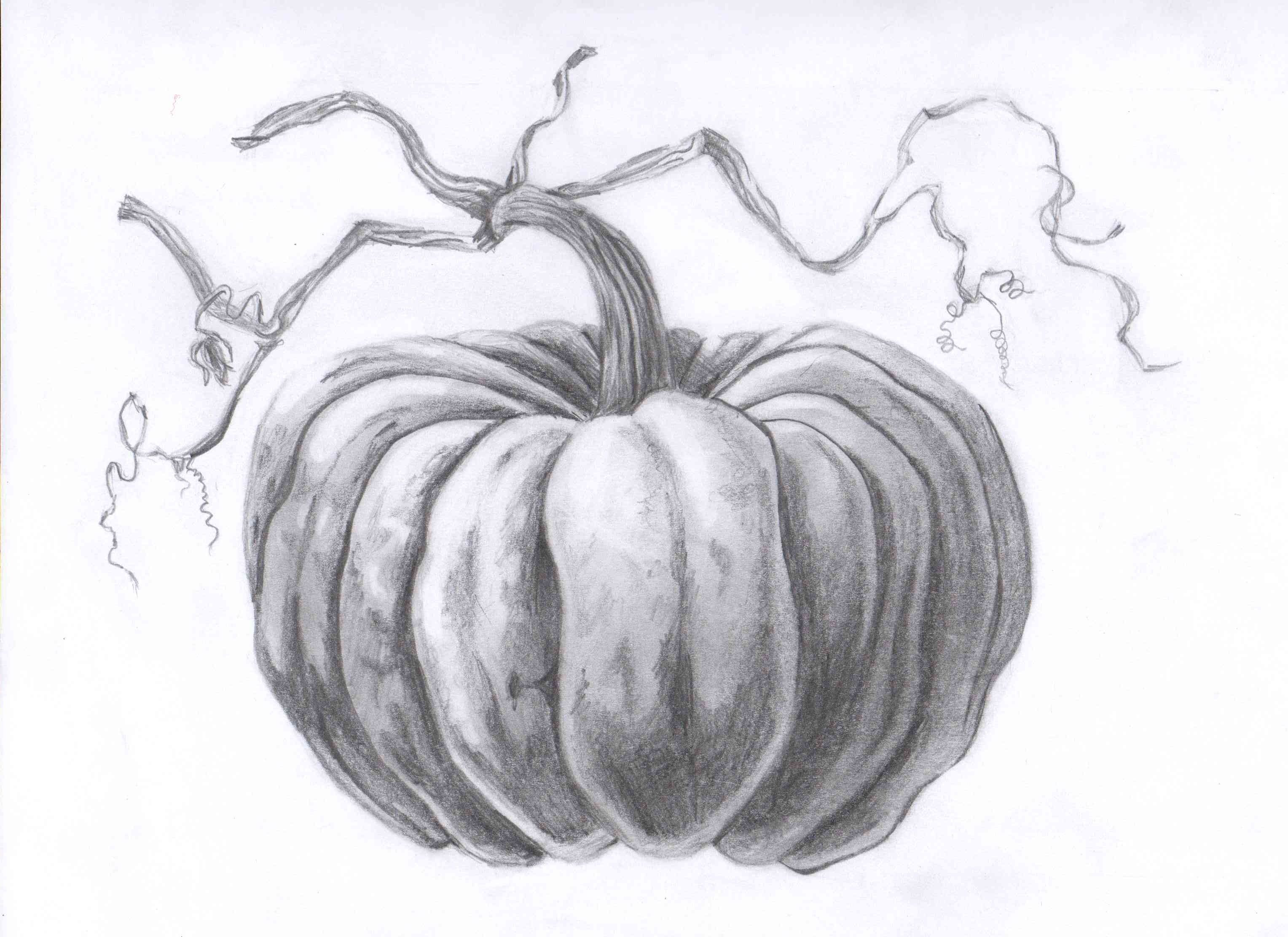 Uncategorized Drawings Of Pumpkins pumpkin drawing thanksgiving pinterest still life with fall pumpkins lessons tes teach