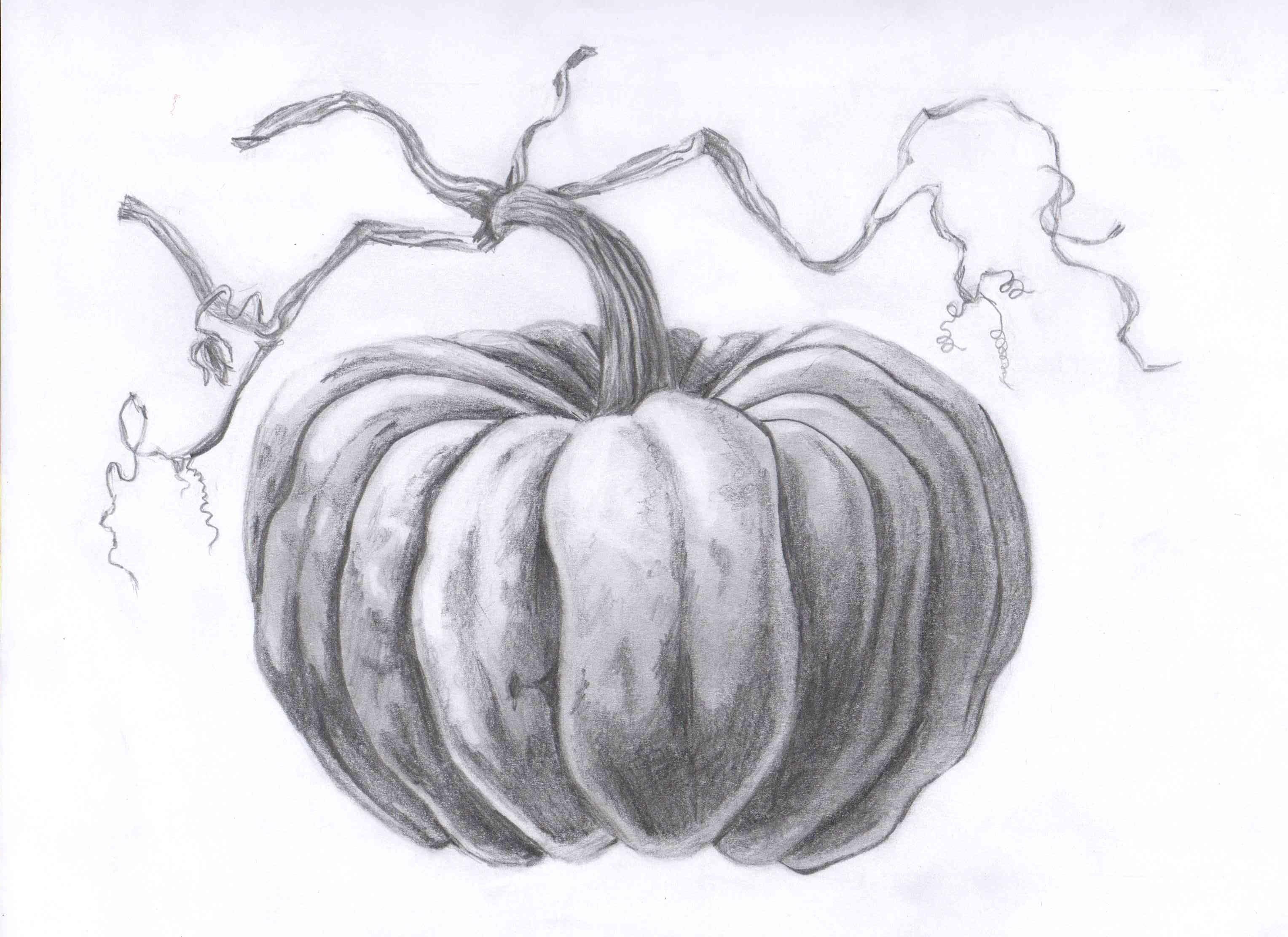 20+ Pumpkin ideas | pumpkin drawing, pumpkin, pumpkin sketch