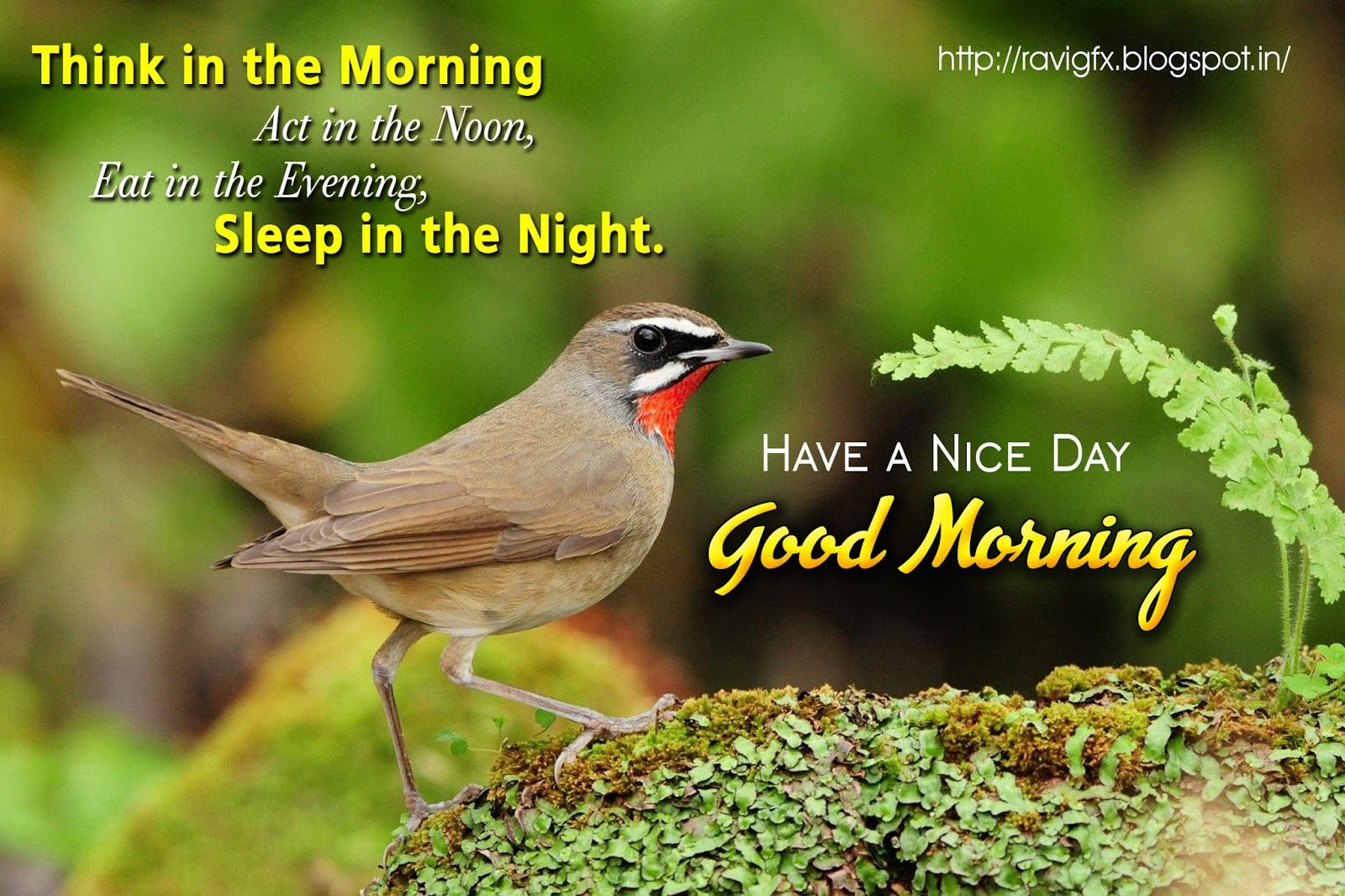 Good Morning Quotes Messages Images Pics Sms Pictures Hd Wallpapers Free Download Birds Cute Birds Good Morning Image Quotes