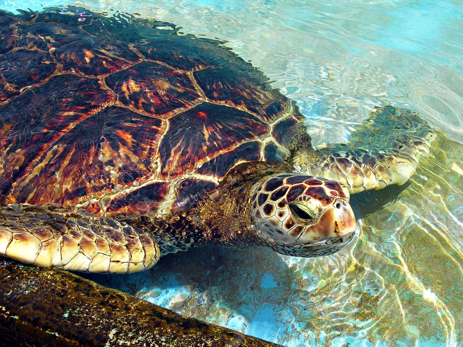 Educational Resources from the Sea Turtle Conservancy httpwww