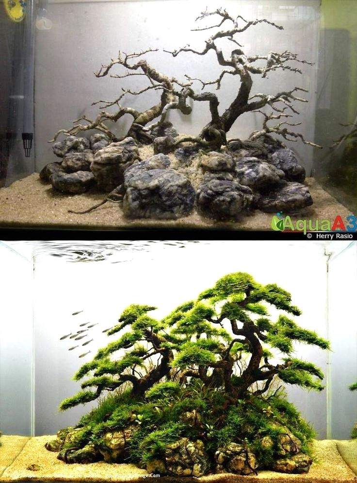 $26 · 21 Best Aquascaping Design Ideas to Decor Your ...