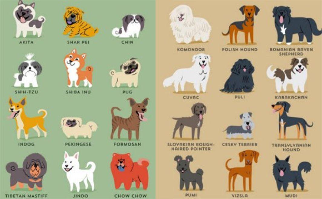 イラスト おしゃれまとめの人気アイデア Pinterest Akira Kanesaka 犬ポスター 種 イラスト 犬