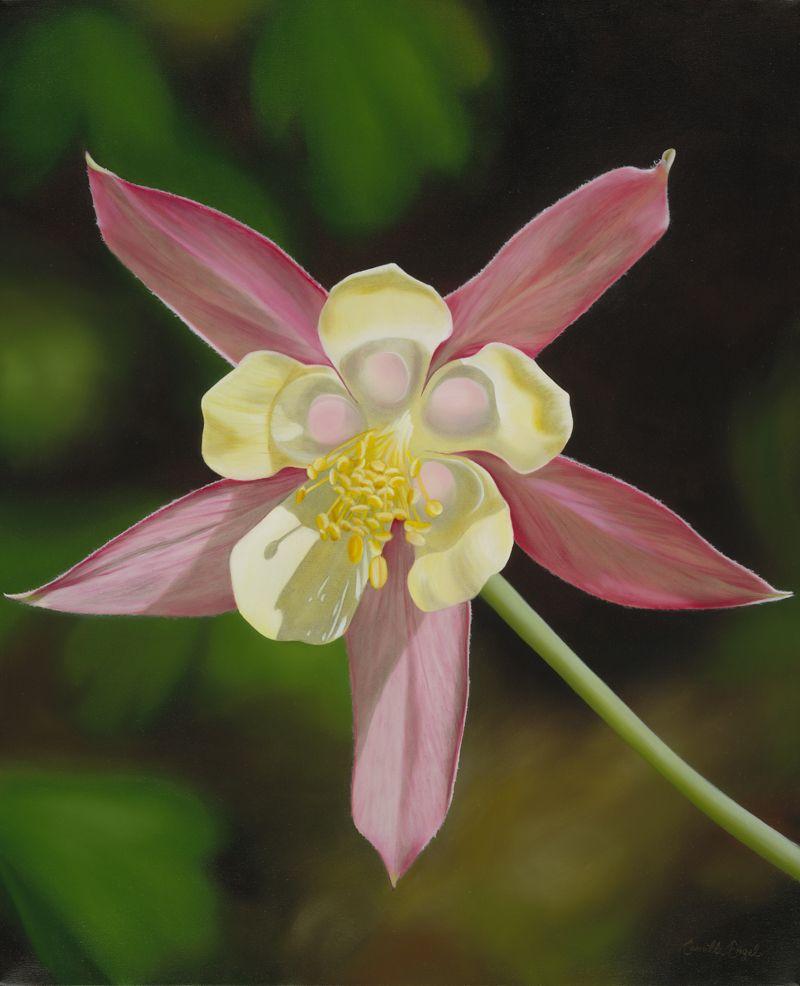 This wild columbine aquilegia canadensis is one of nine georgia beautiful flowers izmirmasajfo Gallery