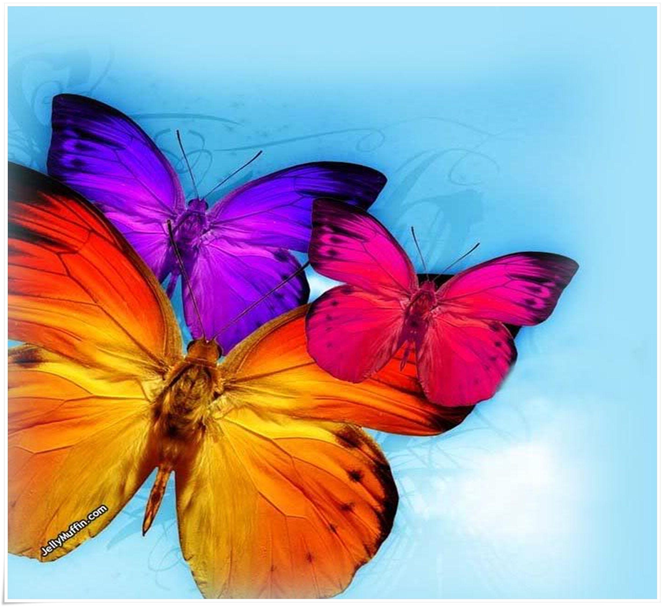 colorful-butterflies-307561.jpg (2300×2100) | Random ...
