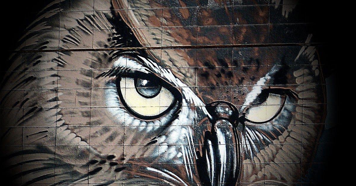Download Gambar Sketsa Burung Hantu Gambar Sayap Coklat Kegelapan Burung Hantu Bulu Burung Black Silhouette Of Owl Vector Burung Hantu Gambar Menggambar Sketsa