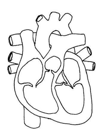 Glkdr Drkn Tarafindan Organlar Panosundaki Fikir Okul Oncesi Faaliyetler Okul
