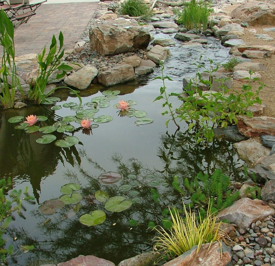 Backyard streams and ponds google search backyard pond for Garden pond ideas pinterest