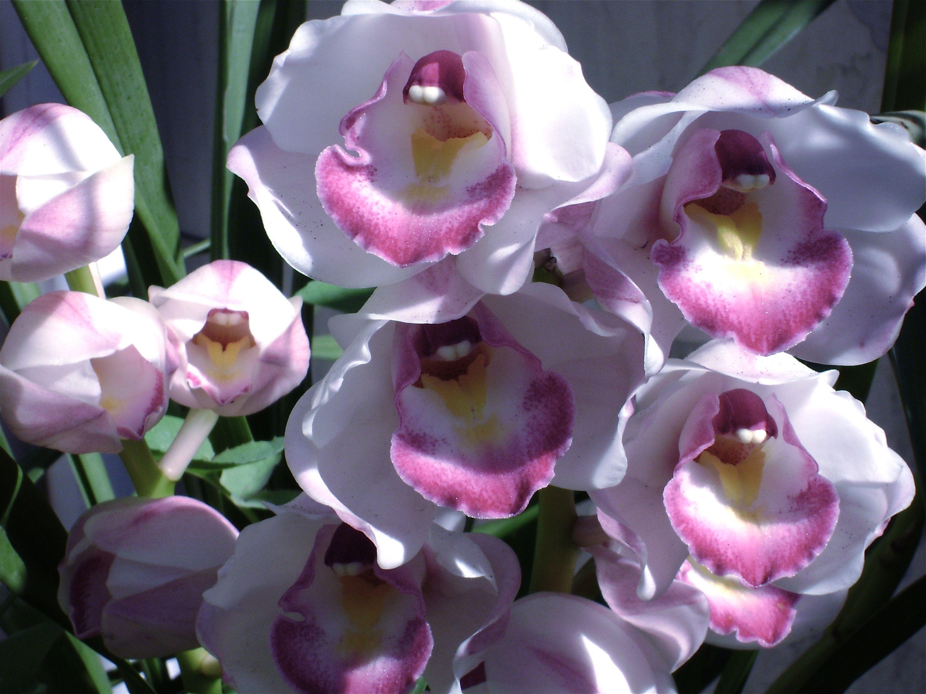 Orquideas de mi jardin foto andy cherniavsky jardines y for Jardines de orquideas