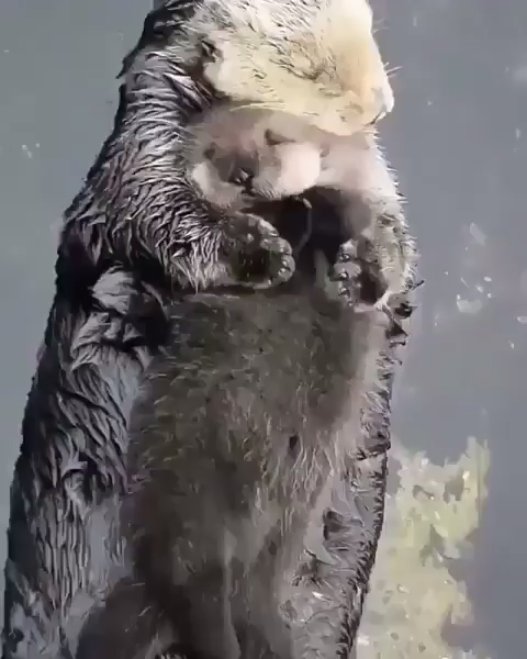 Who wants to be a sea otter pup
