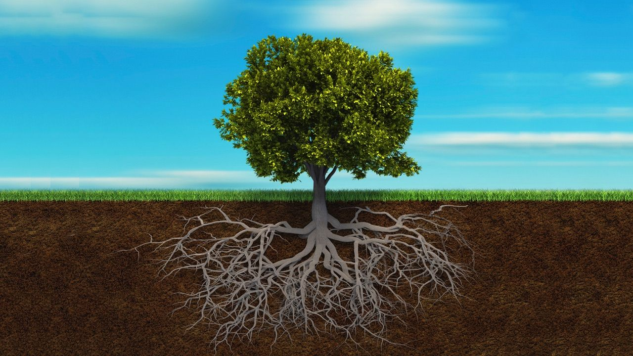 Jesus said, Go into all the world but what if putting down roots is more important than we think?