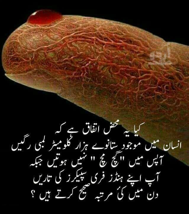 A6eacba978c2372625e7abe90595ec03 Jpg 639 722 Islam Facts True