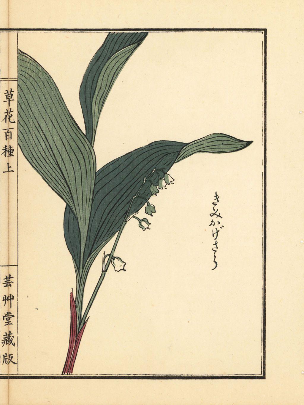 Hanakotoba May Your New Favorite Hobby Lily of