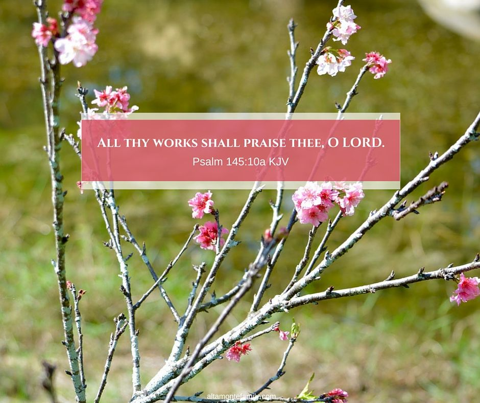 A Lesson Learned From Cherry Blossoms Lessons Learned Lesson Bible Devotions