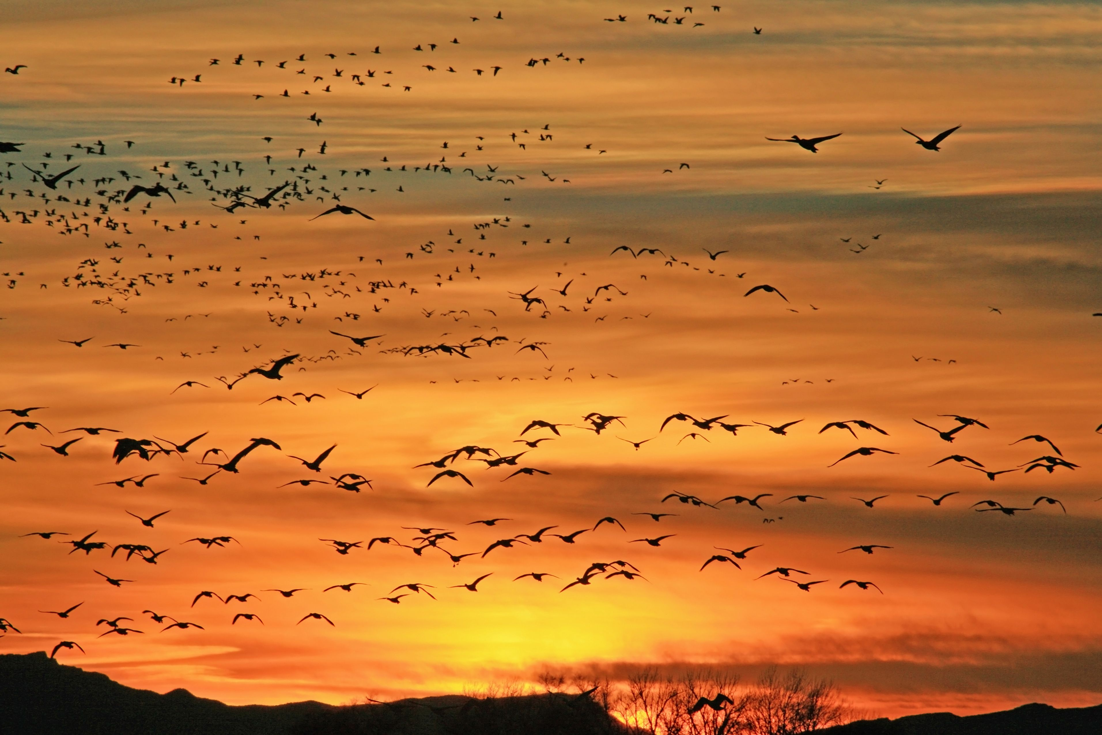 February - The Delta Snow Goose Festival is held on the precise days that thousands of Snow Geese begin their 3,000 mile voyage from Southern California to Canada, with Delta being along their migration path. Crafts, quilt show, 5/10 K, games and more.