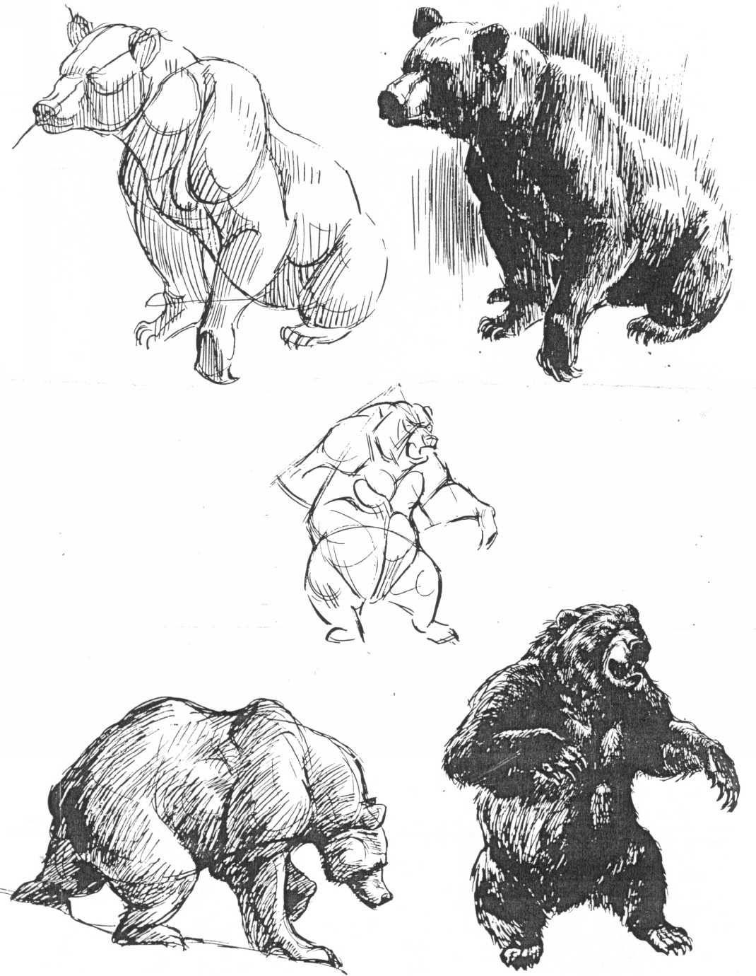 Magnificent Brown Bear Anatomy Component - Anatomy Ideas - yunoki.info